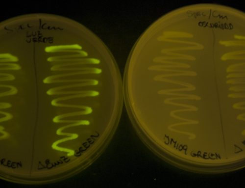 Can a Bacterium Save You From Blowing Into Pieces?